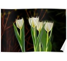 Yellow Tulips of Spring Poster