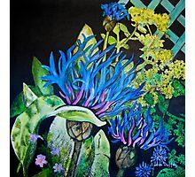 Cornflower Photographic Print