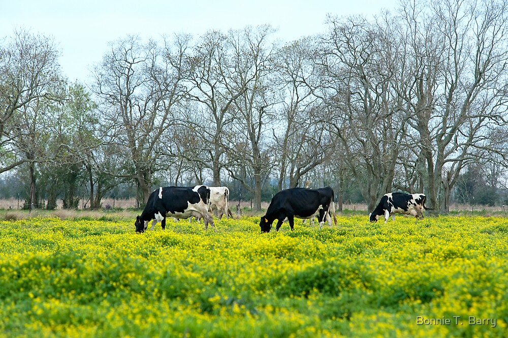 Cows in Spring by Bonnie T.  Barry