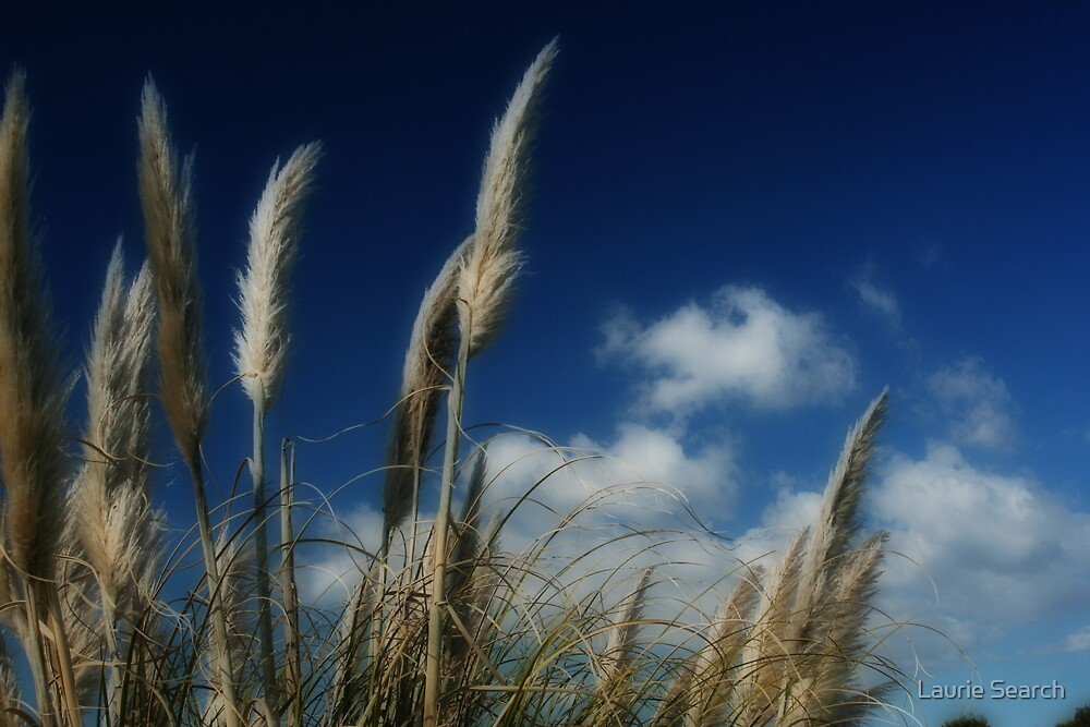 Soft and Breezy by Laurie Search
