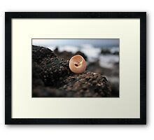 Shell  and  Barnacles Framed Print