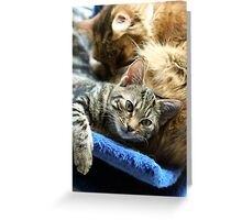 Room for a little one? Greeting Card