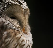 Owl by Carl Eyre