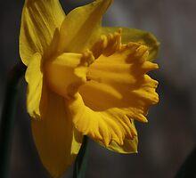 Bright as Sunshine by BettinaSchwarz