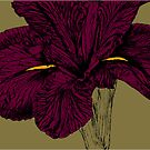 iris purple by andrew j wrigley