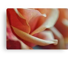 Details of Rose Petals Canvas Print