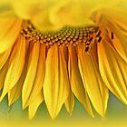 Sunshine On A Stalk by MotherNature2