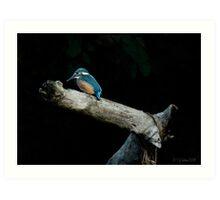 Kingfisher Juvenile - River Avon Art Print