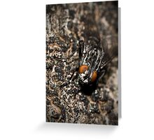 Bug eyed Greeting Card