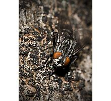 Bug eyed Photographic Print