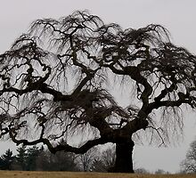 Scraggly Tree by BarbL