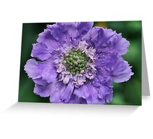Pretty Purple spring flower Greeting Card