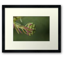 Seed of Sedium Framed Print