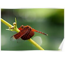red dragonfly II Poster
