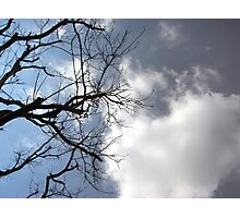 Barren Tree in the Clouds Photographic Print