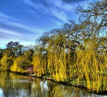 Weeping Willows by Andrew Pounder