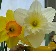 (7) From the Smith College Bulb Show, 2009 by Dennis  Stanton