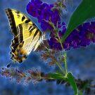 Butterfly by Sandy Keeton
