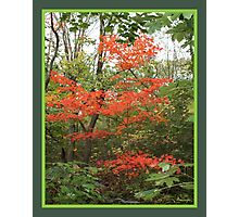 red tree in green background Photographic Print