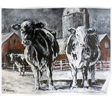 Black and White Cows Poster