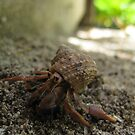Hermit Crab by Will Talley