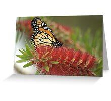 Monarch in Red Greeting Card