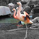 Pink Flamingos by K W