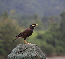 Black Bird by daytona235