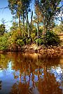 The Murray River & Young River Red Gums  by Christine Smith