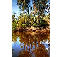 The Murray River & Young River Red Gums  Photographic Print