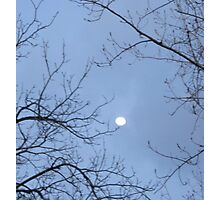 TREE TRIES TO TOUCH THE MOON Photographic Print