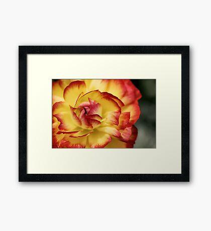Colorful petals Framed Print