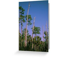 Flatwoods Greeting Card