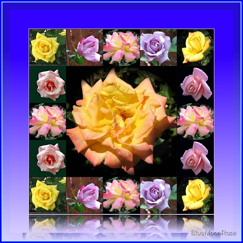 Summer Roses Collage by BlueMoonRose