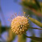 Florida Flower by MMerritt
