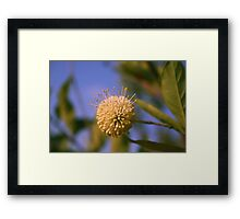 Florida Flower Framed Print