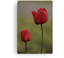Paired Tulip's #2 Canvas Print