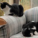 one sofa, two cats by oliversutton