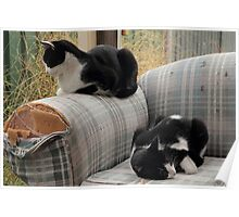 one sofa, two cats Poster