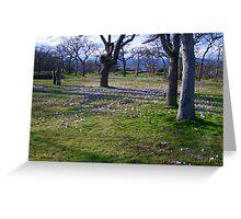 Field of Crocus Greeting Card