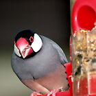 Finch by baldy