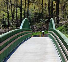 Biker on the Swamp Rabbit Trail by Darlene Lankford Honeycutt