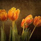 Tulips Together by Holly Cawfield