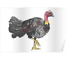 Brush Turkey Poster
