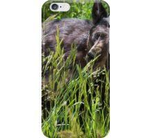 Black bear awaking for the season iPhone Case/Skin