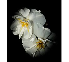 White and yellow flower Macro Photographic Print
