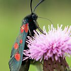 Moth by baldy