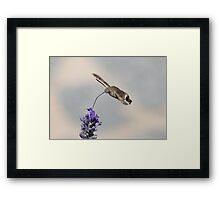 Humming Bird Moth 4 Framed Print