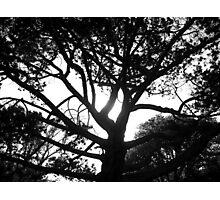 BROODING BOTANICS - LAUNCESTON Tasmania Photographic Print