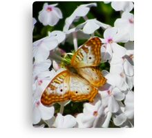 WHITE PEACOCK BUTTERFLY Canvas Print